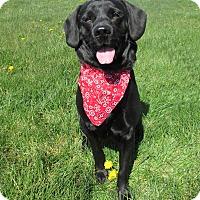 Adopt A Pet :: DOYLE - New Cumberland, WV
