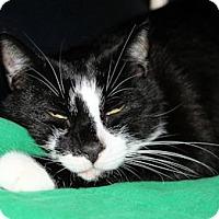 Adopt A Pet :: Flynn #2 - Lunenburg, MA