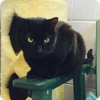 Adopt A Pet :: Sabrina - Oakland, NJ