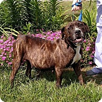 Adopt A Pet :: Carmen - Seneca, SC