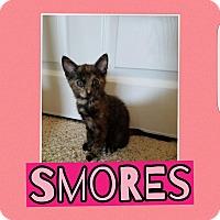 Adopt A Pet :: Smores - Palmdale, CA