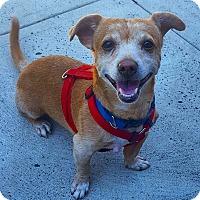 Adopt A Pet :: Jiff - Bronx, NY