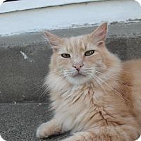 Adopt A Pet :: Bingo - Flemington, NJ