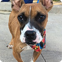 Adopt A Pet :: Benny - Cleveland, OH
