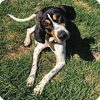 Adopt A Pet :: Tesla *Foster* - Appleton, WI