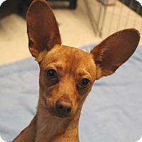 Adopt A Pet :: Cubby - Rancho Cordova, CA