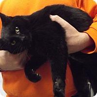 Adopt A Pet :: Felix - Cheboygan, MI