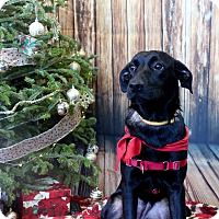Adopt A Pet :: Zara - Mississauga, ON