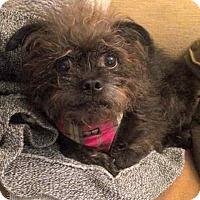 Adopt A Pet :: PENNY - Los Angeles, CA