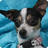 Adopt A Pet :: Charlotte Chi Manzella - Cuba, NY
