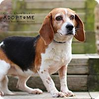Adopt A Pet :: Izzy - Edwardsville, IL