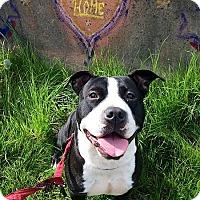 Adopt A Pet :: Lulabelle  **URGENT** - Berkeley, CA