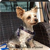 Adopt A Pet :: Mickey - Ft Myers, FL