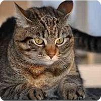 Adopt A Pet :: Sadie - Modesto, CA