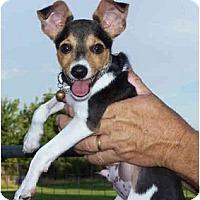 Adopt A Pet :: TARGET - Phoenix, AZ