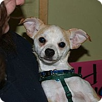 Adopt A Pet :: Atlas - Vaudreuil-Dorion, QC