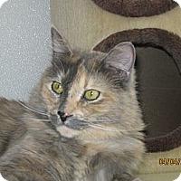 Adopt A Pet :: Novalee - Colorado Springs, CO