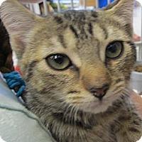 Adopt A Pet :: Phia - Riverhead, NY