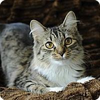 Adopt A Pet :: Aleya - Columbus, OH