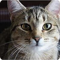 Adopt A Pet :: Elaine - Xenia, OH