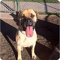 Adopt A Pet :: J.J. - Phoenix, AZ