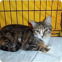 Adopt A Pet :: Snickers - Catasauqua, PA
