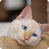 Adopt A Pet :: Casper - Fountain Hills, AZ