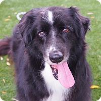 Adopt A Pet :: MADELEINE - San Pedro, CA