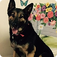 Adopt A Pet :: Sierra - Irmo, SC