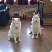 Adopt A Pet :: Nannuk & Qannik - Crystal Lake, IL
