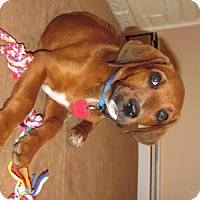 Adopt A Pet :: Rhett - Homer, NY