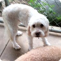 Adopt A Pet :: Moe - Tavares, FL