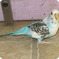 Adopt A Pet :: Archie & Nefi - Edgerton, WI