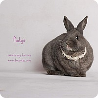 Adopt A Pet :: Pudgy - Jurupa Valley, CA