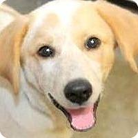 Adopt A Pet :: KOKO(OUR