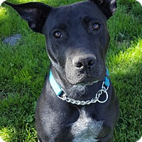 Adopt A Pet :: Daisy - Awesome Girl! - Bend, OR