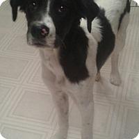 Adopt A Pet :: Jezebelle - Manhattan, KS