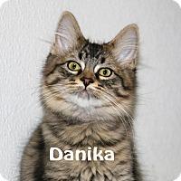 Adopt A Pet :: Danika - Idaho Falls, ID