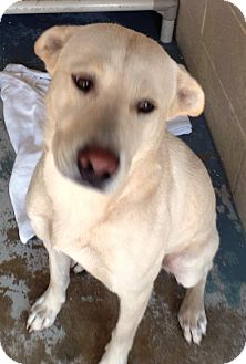 Shepherd (Unknown Type) Mix Dog for adoption in Crown Point, Indiana - Ferris Bueller