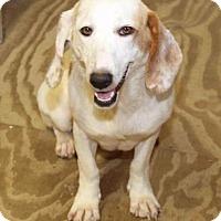 Adopt A Pet :: Leda - Rossville, TN