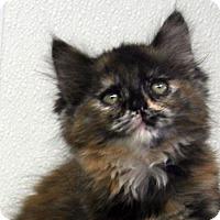 Adopt A Pet :: Crimson - Republic, WA