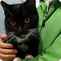 Adopt A Pet :: Mouse - Port Coquitlam, BC