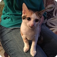 Adopt A Pet :: Flora - Delmont, PA