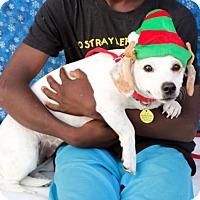 Adopt A Pet :: Aspen - Tustin, CA
