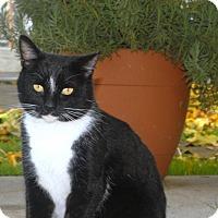 Adopt A Pet :: Tux - Parlier, CA