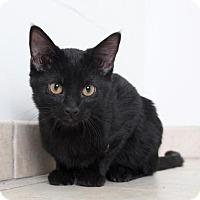 Adopt A Pet :: Tic Tac C170002: PENDING ADOPTION - Edina, MN