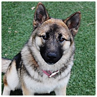 Adopt A Pet :: ROXY - Glendale, CA