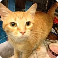 Adopt A Pet :: Paige Harlot - Byron Center, MI