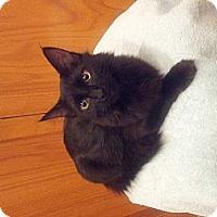 Adopt A Pet :: Skittles - Chandler, AZ