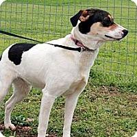 Adopt A Pet :: Whisper - Linden, TN
